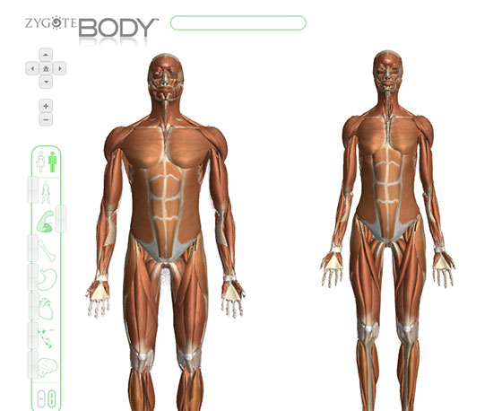Google\'s Anatomy Browser is now Zygote Body - All Things Gym