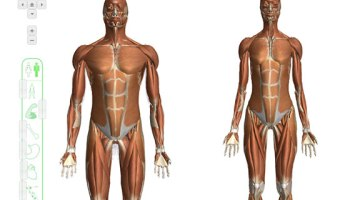 Free Interactive 3D Human Anatomy Atlases - All Things Gym