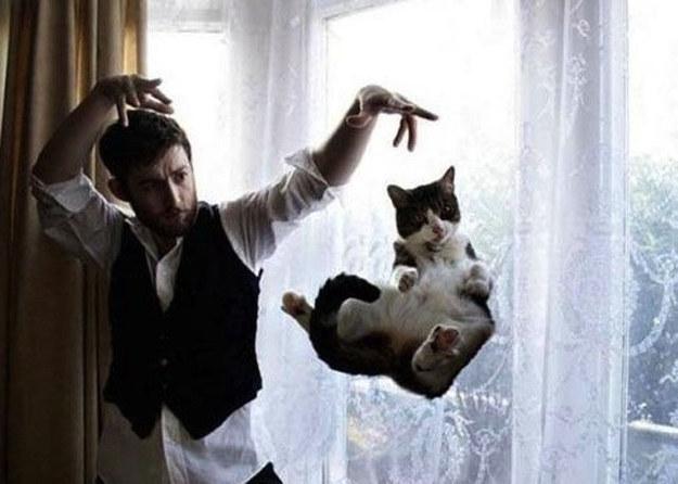 Levitating cat