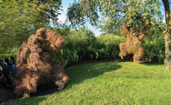 orangutan-pair