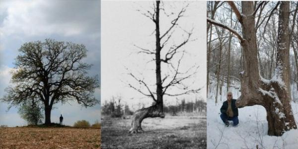 Trail Marker Trees