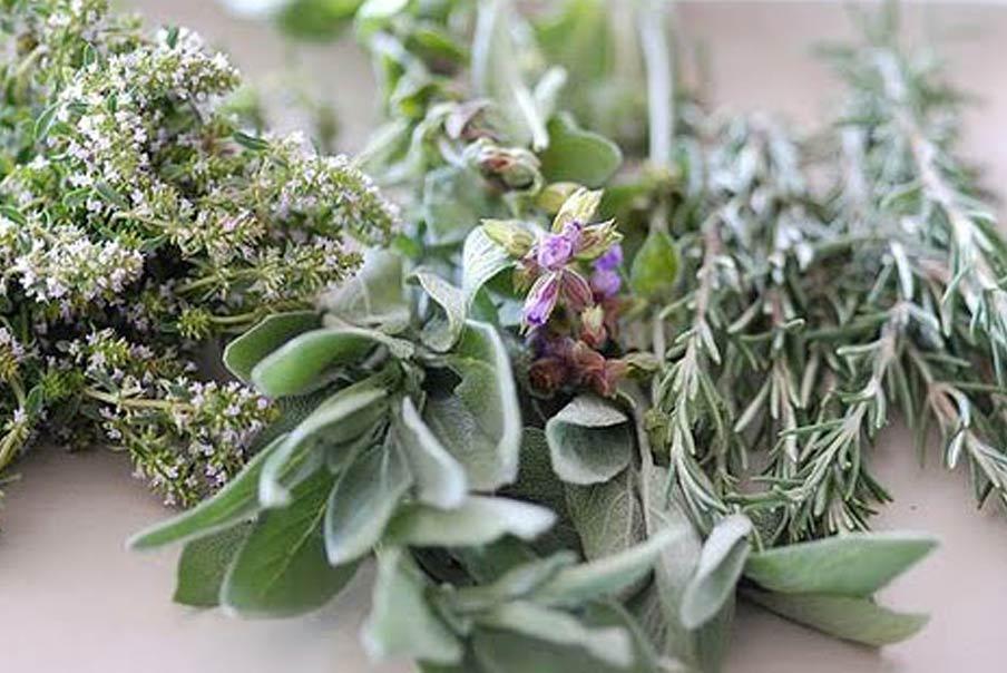 propiedades mágicas de las plantas mas comunes