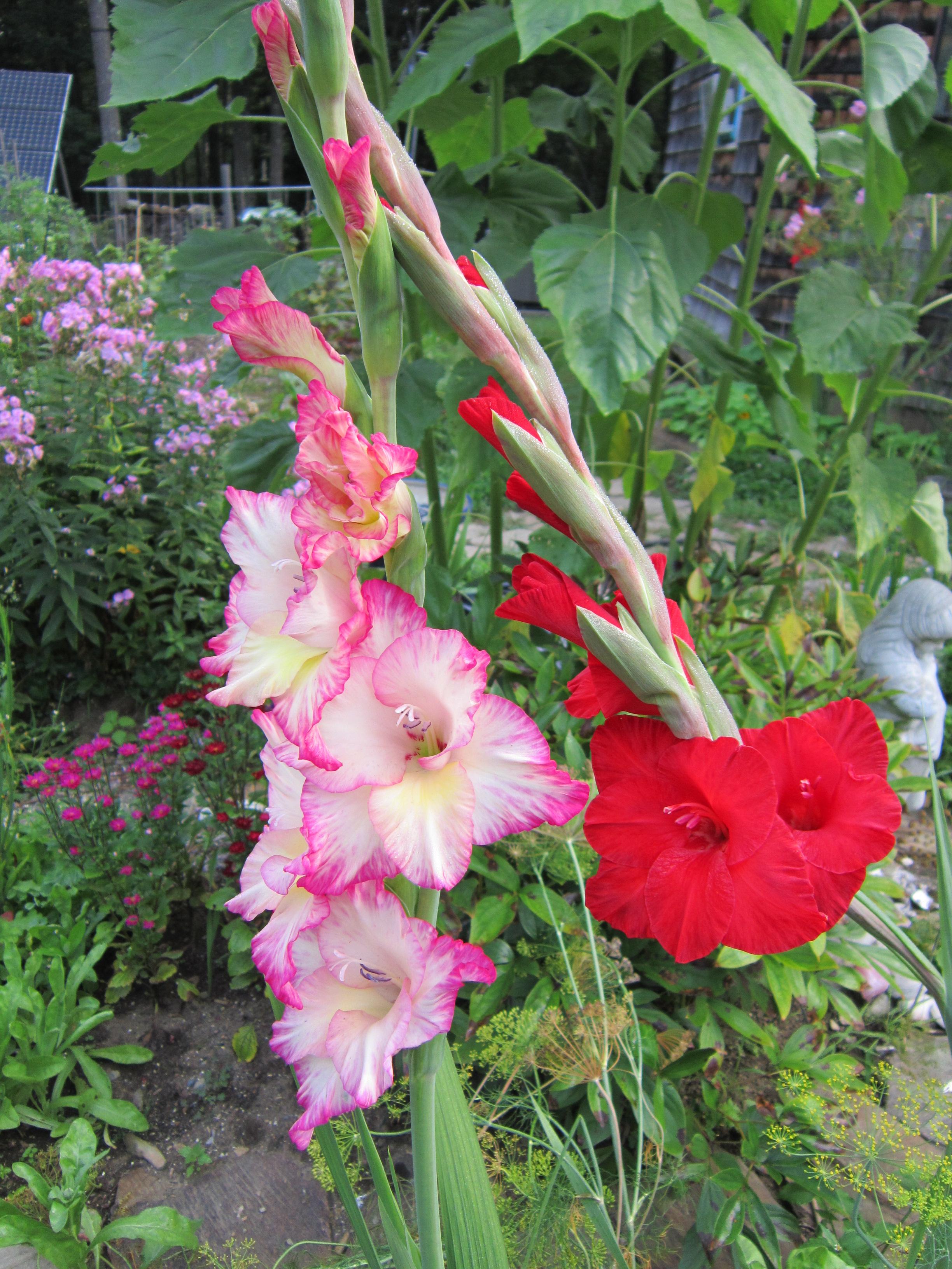 What Plant Raised Garden