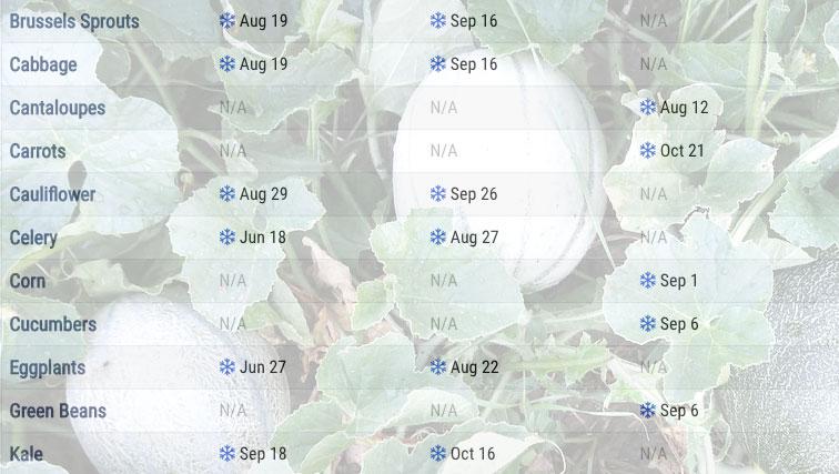 Planting Calendar When To Start Vegetable Seeds The Old Farmer S Almanac