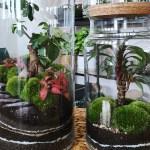 How To Make A Terrarium The Best Plants For Terrariums The Old Farmer S Almanac