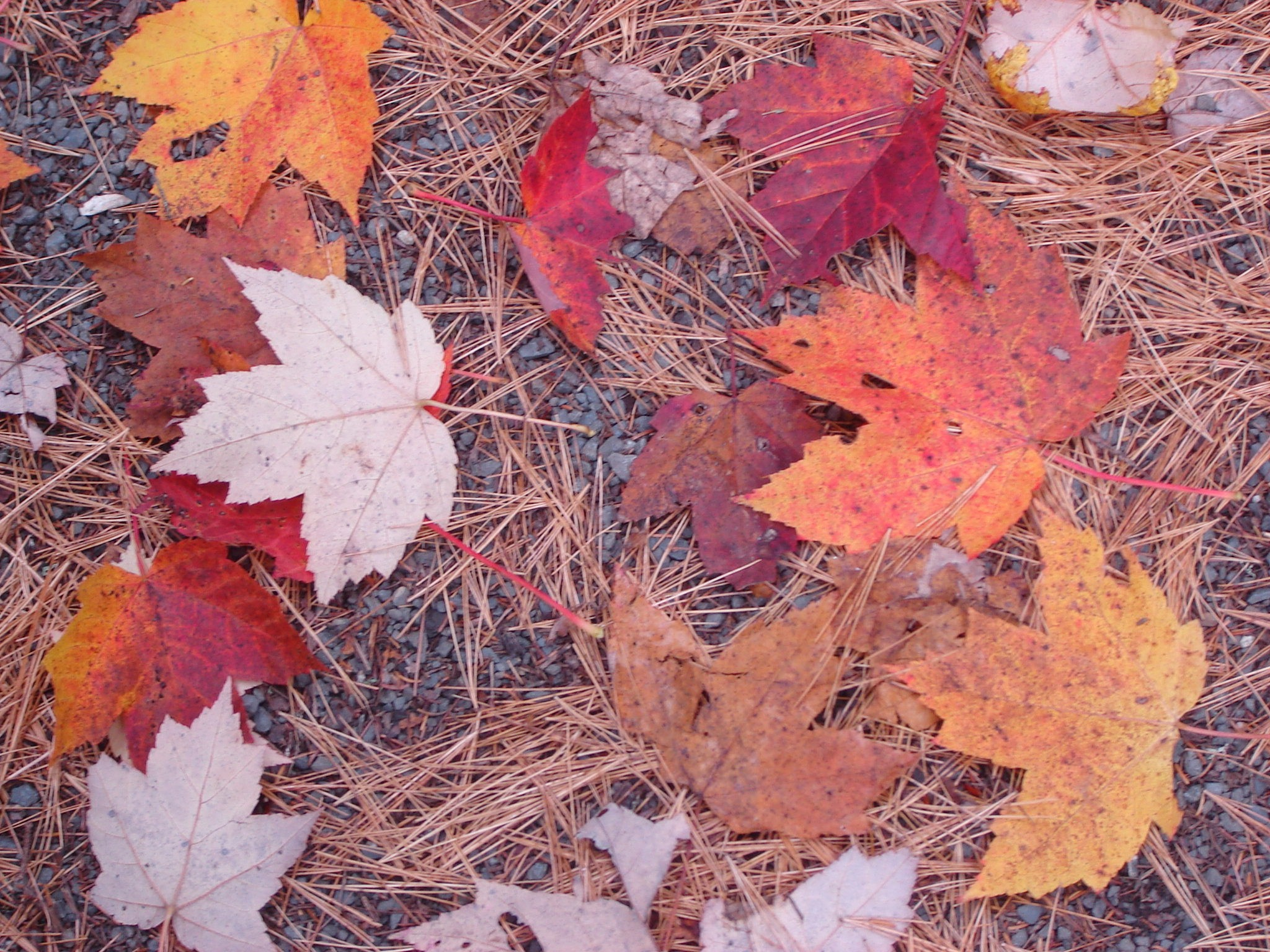 Fall Foliage Why Do Autumn Leaves Change Color