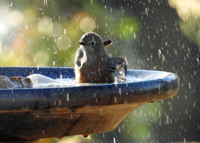 Spring bird bath