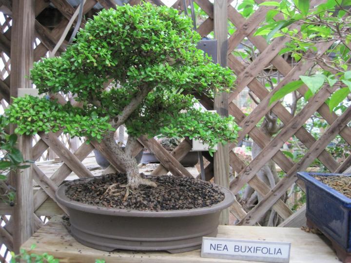 wimberley_bonsai_004_full_width.jpg