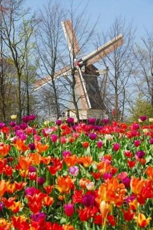 Parque das Tulipas Holanda