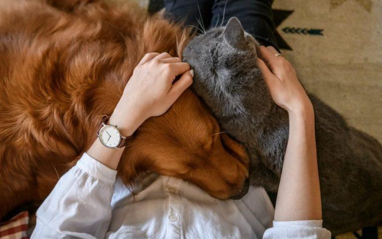 acariciar a tu mascota correctamente