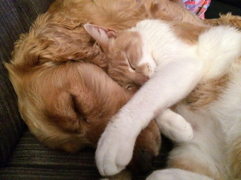 Consejos para conseguir que perros y gatos convivan en la misma casa