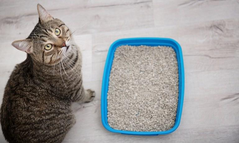 Diferentes tipos de arena para gatos