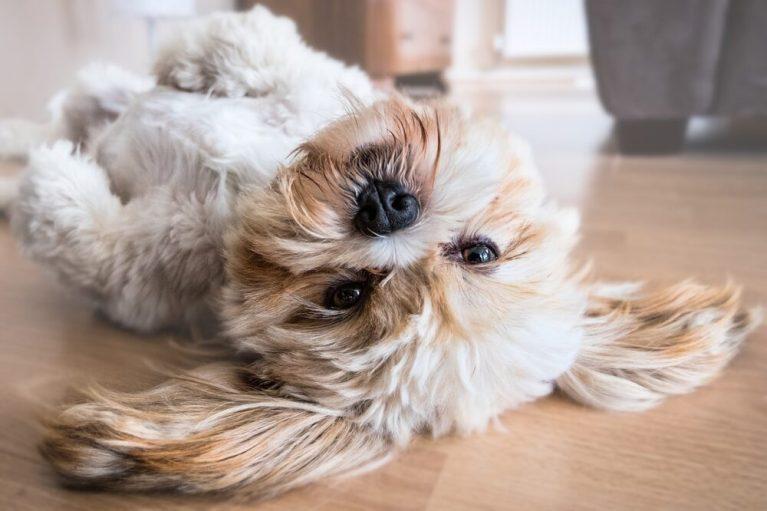 temperatura ideal en casa para un perro