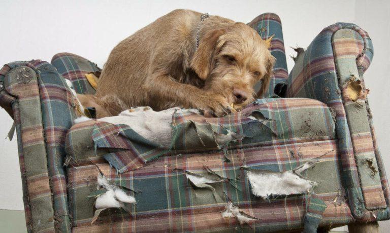 Cómo evitar que tu perro destroce tus muebles