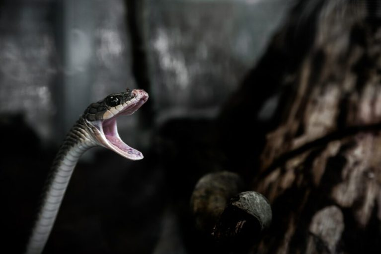 Por qué mi serpiente no come