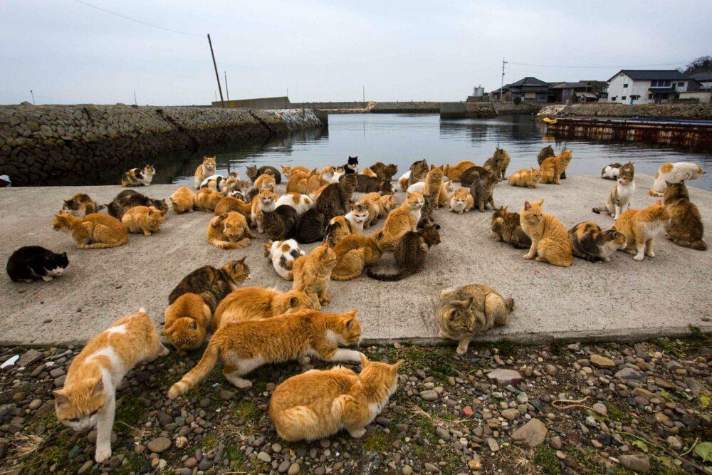 La isla de los gatos en Japón