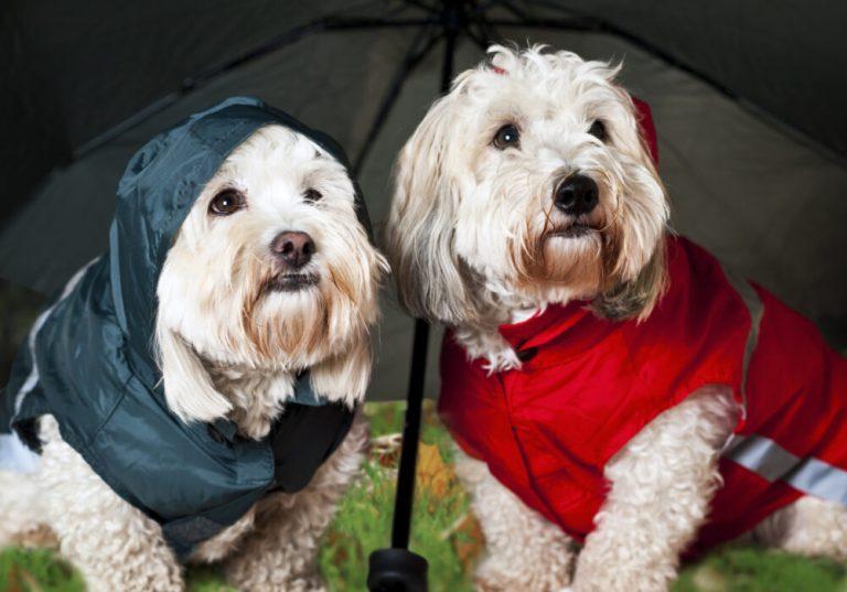¿Es buena idea pasear a los perros bajo la lluvia?
