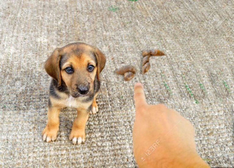 cómo regañar a tu perro