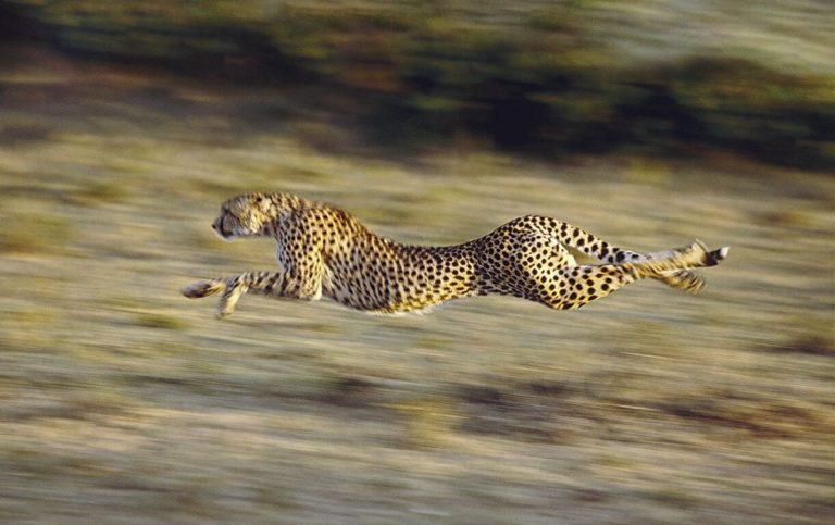 Los animales más rápidos del mundo