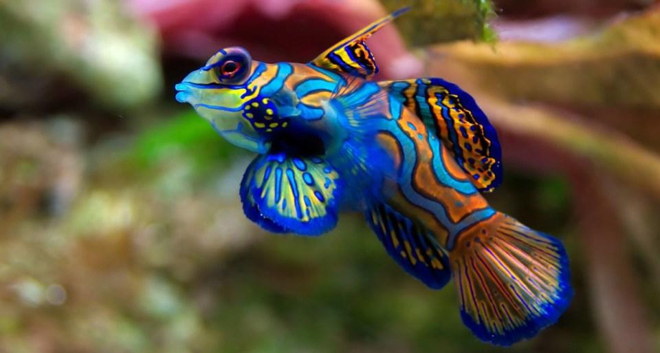 así respiran los peces