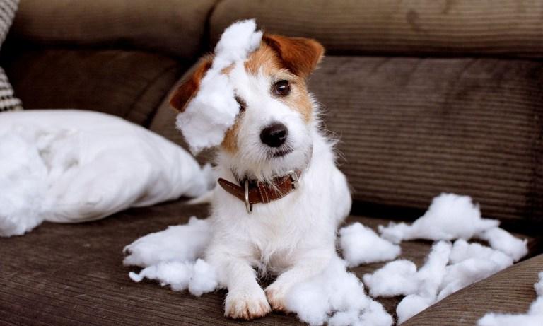 Maneras de enseñar a un perro a no morderlo todo