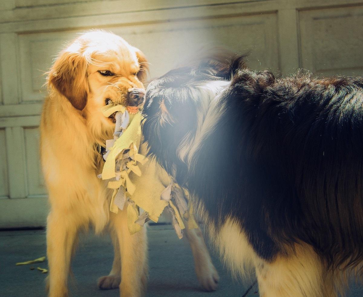 Maneras de reducir la agresividad de un perro
