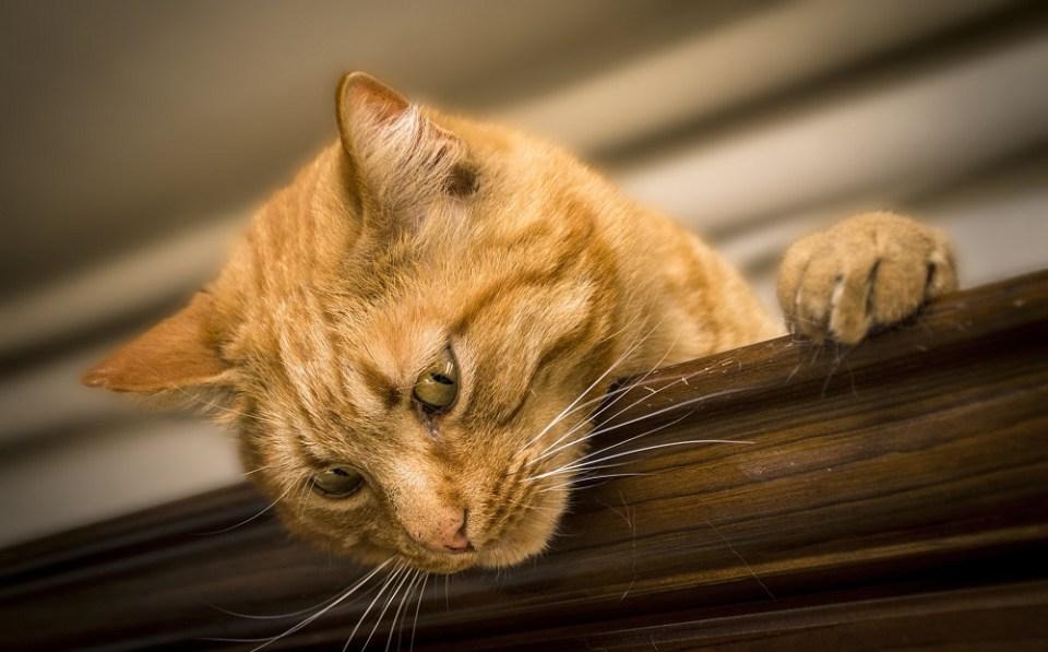 Cuidados que necesita un gato enfermo