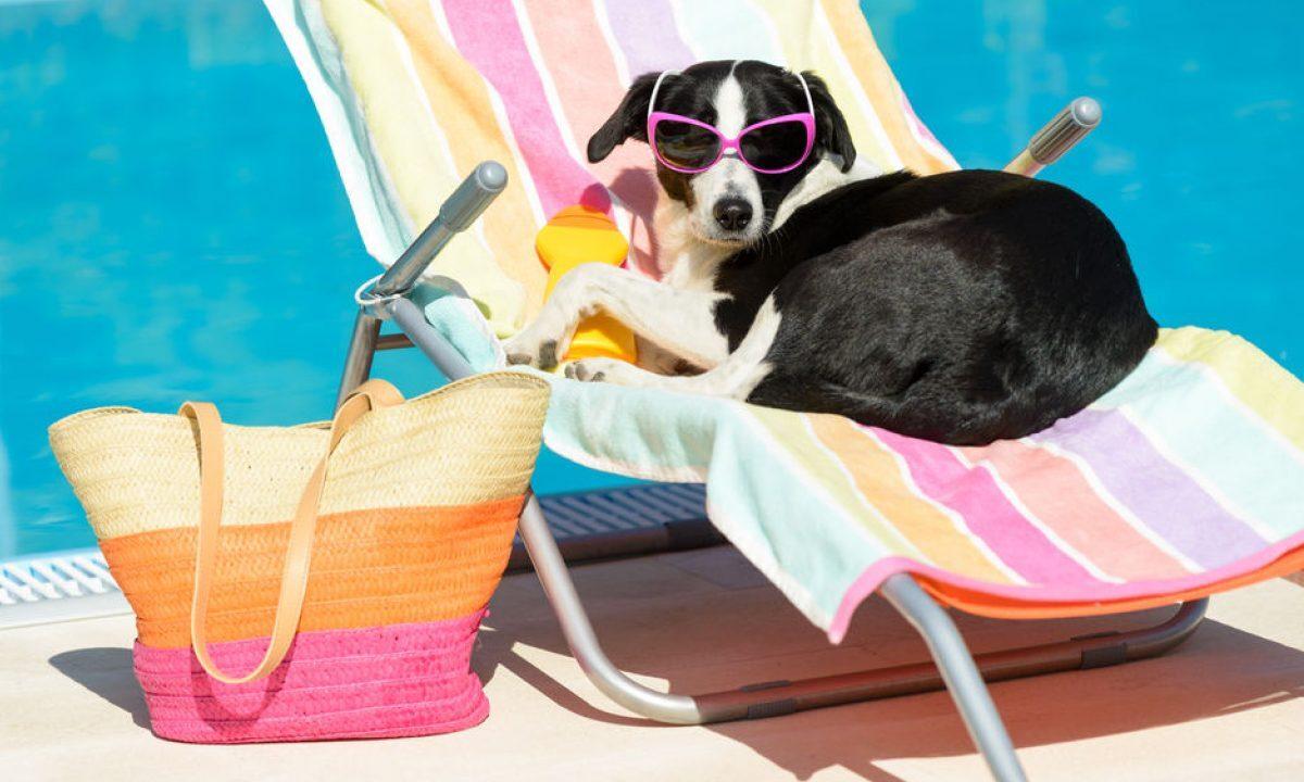 perros necesitan protección solar