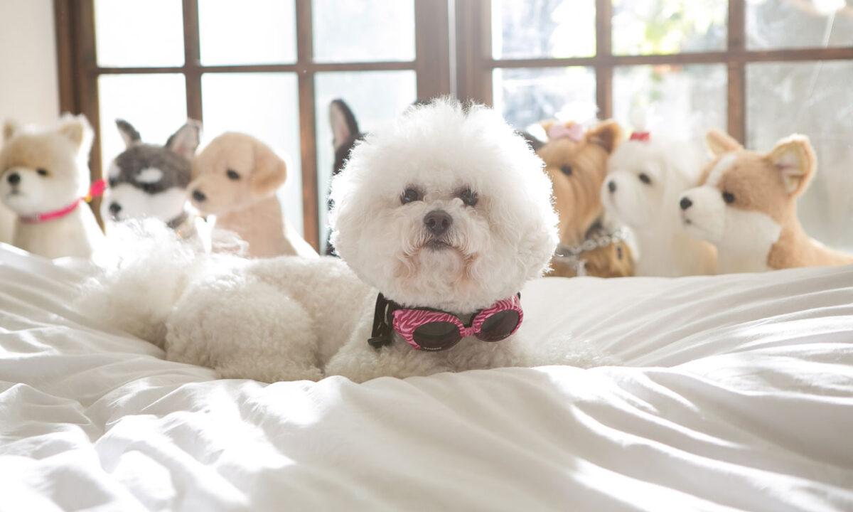 Perros sin olor