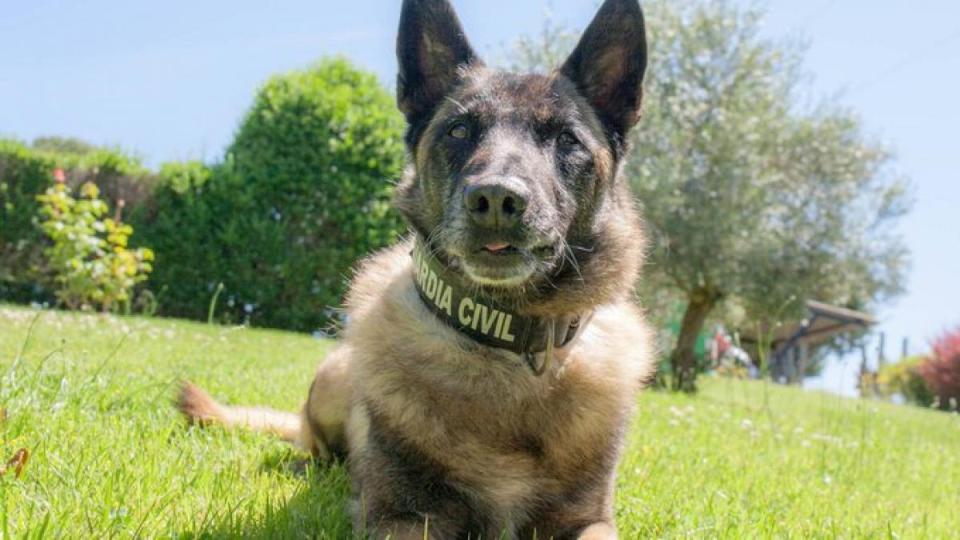 Casos reales en los que los perros policía han ayudado