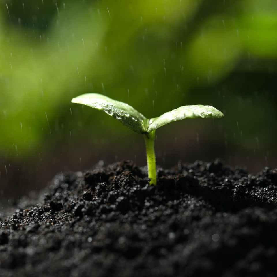 qué produce el olor a tierra mojada