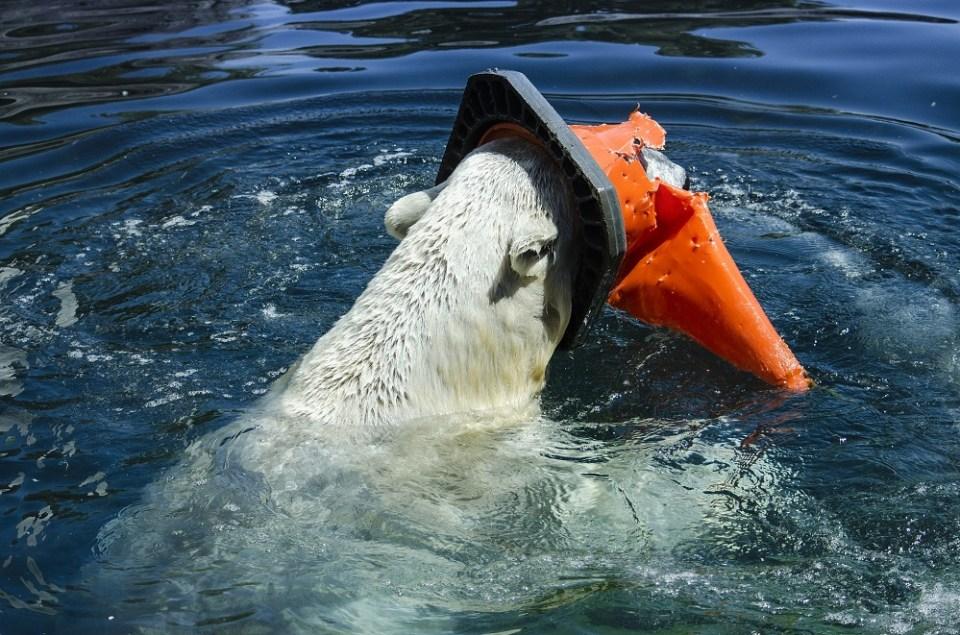 Animales afectados por la contaminación de mares y océanos