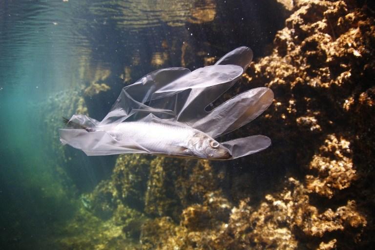 Cómo está afectando la contaminación a la vida marina