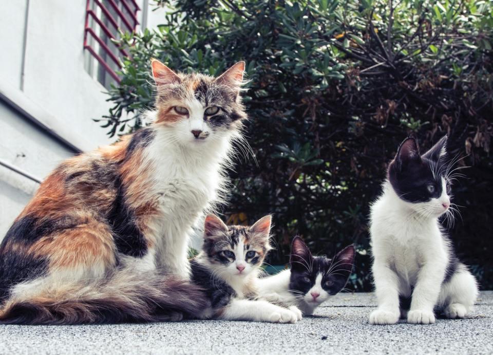 Sigue estos consejos para introducir un gatito en casa si ya tienes otras mascotas
