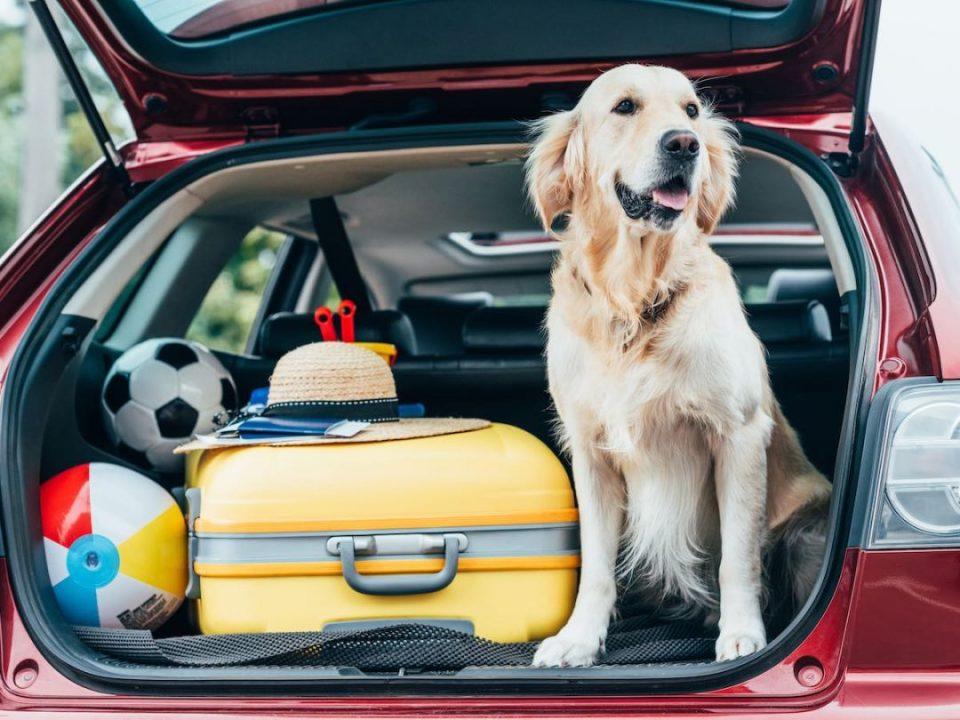 Perro viaje en coche