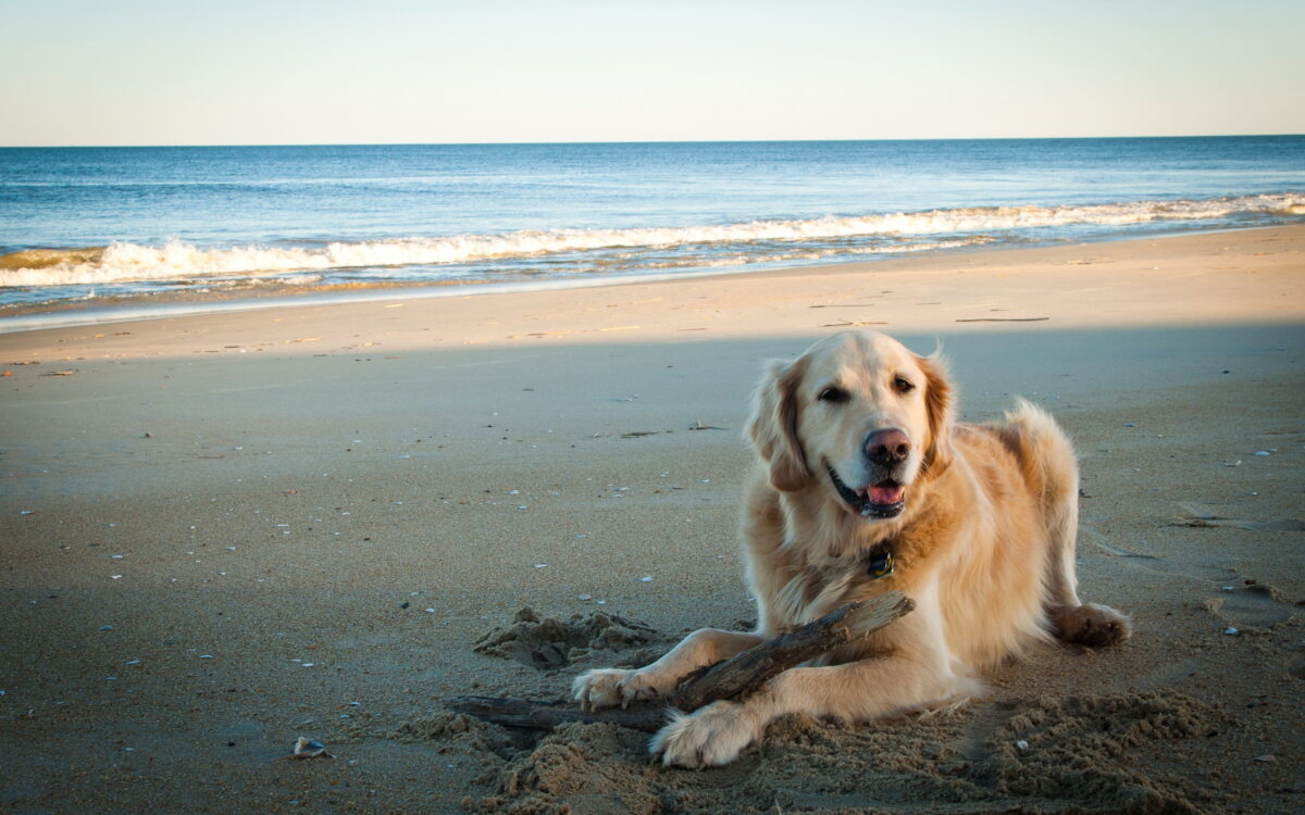 perro beba agua salada del mar