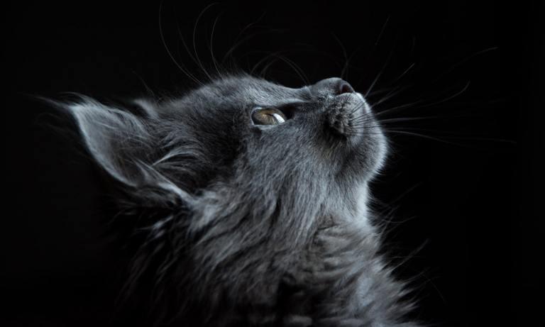 Descubre cuáles son los Problemas renales en gatos: causas y tratamientos