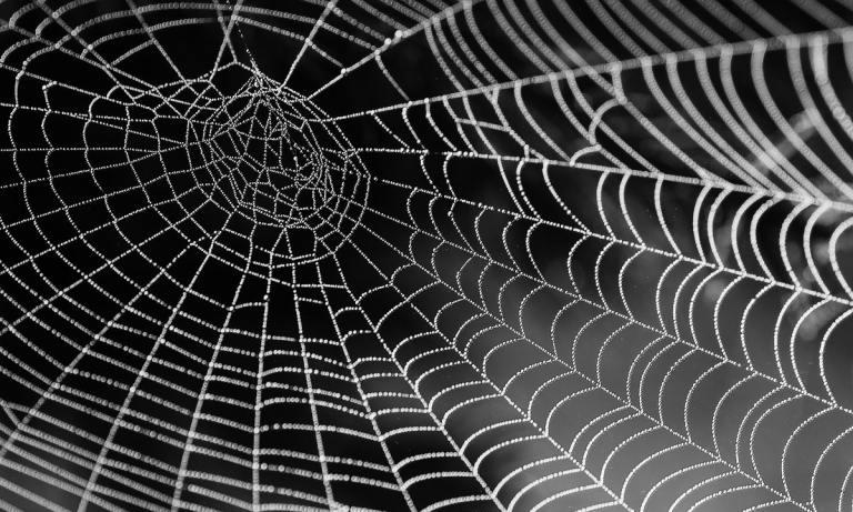 Descubre qué es el miedo a las arañas o aracnofobia