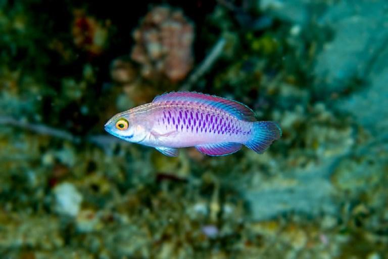 Conoce algunas de las especies extrañas que han sido descubiertas recientemente en el océano