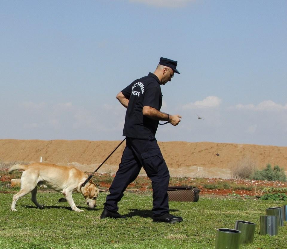 Entrenamiento para que un perro detecte el COVID