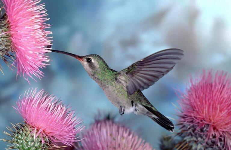 aves que se alimentan de néctar