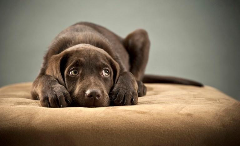 reducir la ansiedad en los perros