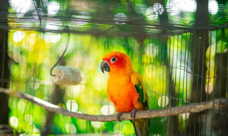 Descubre en qué consiste el enriquecimiento ambiental para jaulas de pájaros