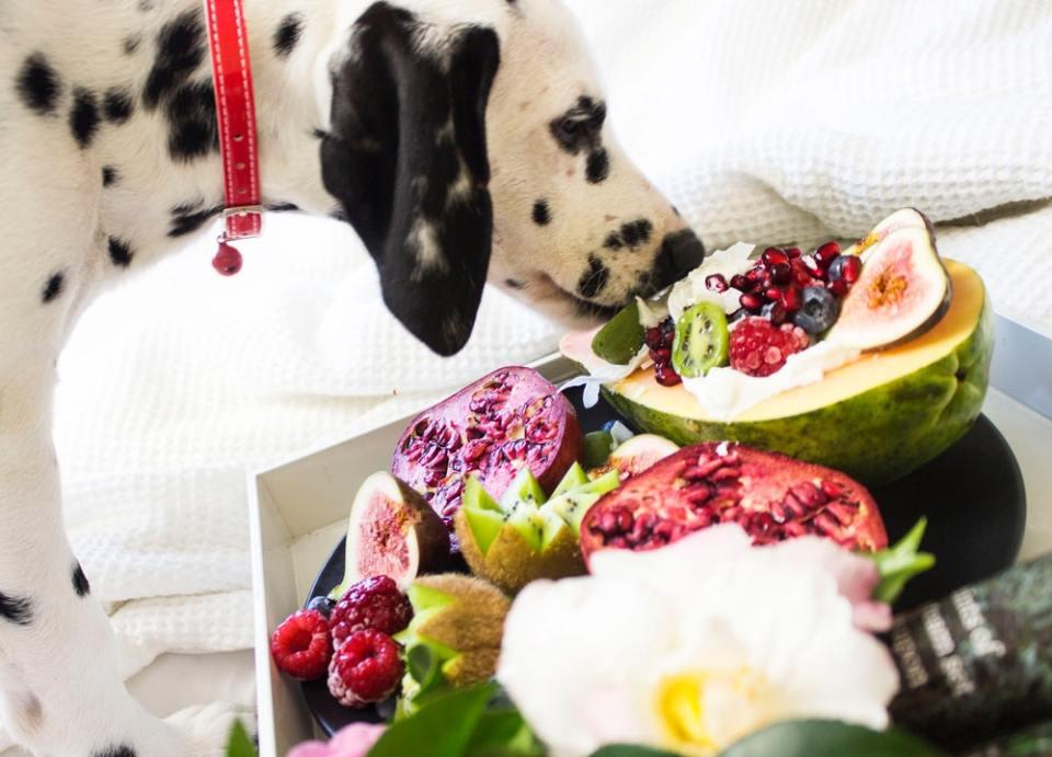 Te contamos si es bueno alimentar a un perro solo con carne o si deberías darle pienso