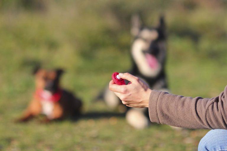 utilizar un clicker para adiestrar a tu perro