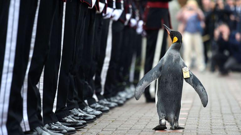 Animales en el ejército: el coronel Nils Olav