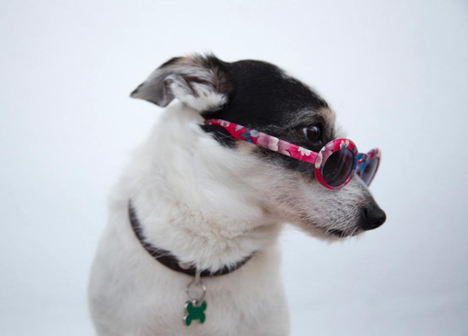 Los de las series y películas son algunos de los  nombres originales y bonitos para perros