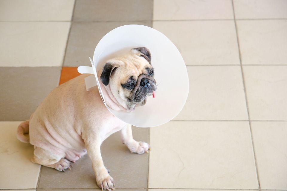 Qué hacer si mi perro se ha cortado