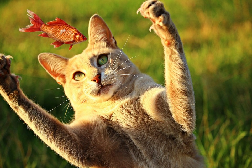 Por instinto natural y maternal, son las principales razones por las que los gatos llevan animales muertos a sus dueños