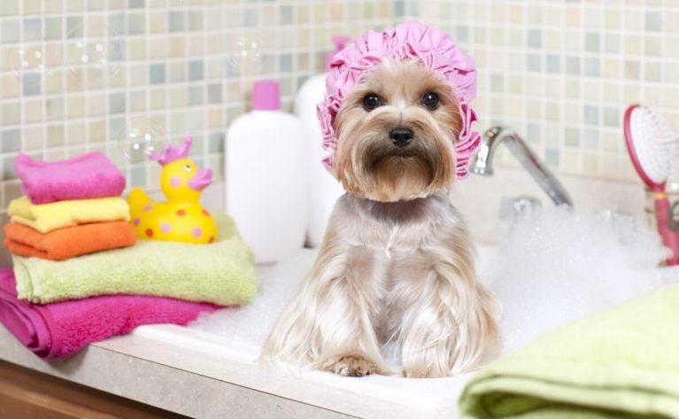 bañar a tu perro en casa